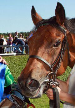 Alter König für Torsten Mundry dreimaliger Sieger - zweimal als Jockey, ein Sieg 2009 als Trainer im Agl. II  in Düsseldorf.www.galoppfoto.de.JPG