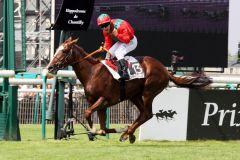 Lope de Vega bei seinem Sieg im Prix du Jockey Club, Gr. I - Französisches Derby, 2010 in Chantilly. www.galoppfoto.de - Scherning