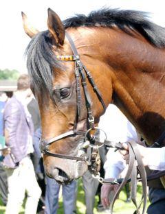 Lucky Lion im Führring vor dem Derby im Porträt. Foto: Karina Strübbe