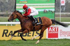 Ein Pferd mit Perspektive: Accon gewinnt unter Jiri Palik. Foto: Dr. Jens Fuchs