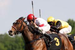 Amare (Eugen Frank) bei ihrem Maidensieg beim Quelle Amore-Rennen in Hoppegarten. www.galoppfoto.de