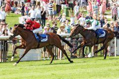 Ashrun gewinnt eindrucksvoll das letzte Vorbereitungsrennen auf das Derby. www.galoppfoto.de - Sabine Brose