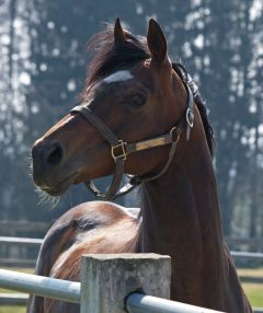 Stallion Doyen in Auenquelle März 2011. www.dequia.de - Göldner