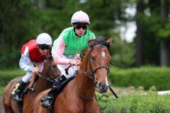 Avestan, hier mit Michael Cadeddu bei seinem Auftritt in Krefeld, wo er Zweiter wurde, hat noch eine Derby-Nennung und soll im Sieglosen-Rennen punkten. Foto: Dr. Jens Fuchs