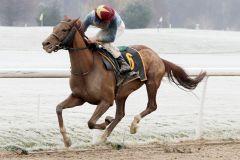 Da kommt keiner mehr - Azonto und Michael Cadeddu gewinnen mit dem Familienpferd. www.galoppfoto.de - Stephanie Gruttmann