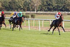 Ein Pferd mit Perspektive: Danelo gewinnt im Handgalopp. www.galoppfoto.de - Sabine Brose