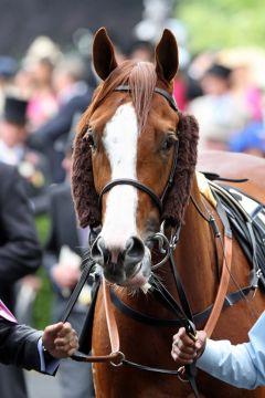 Helmet in diesem Jahr mit strengem Mittelscheitel in Royal Ascot. www.galoppfoto.de - Frank Sorge