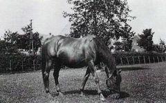 Ibidem (GER) 1903