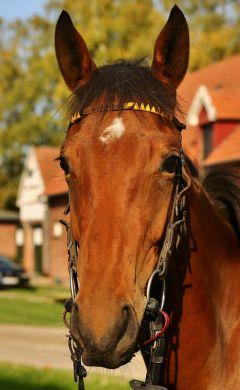 Lassair Oktober2019  Foto: www.rennstall-woehler.de