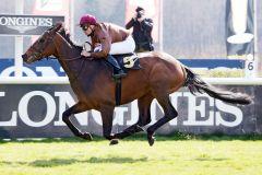 Lord Charming gibt einen erfolgreichen Einstand. www.galoppfoto.de - Sabine Brose