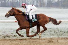 Mojano gewinnt mit Bayarsaikhan Ganbat an Bord im Dortmunder Maiden auf Sand. www.galoppfoto.de - Stephanie Gruttmann
