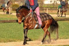 N. N. v. King's Best - Rosa Di Brema