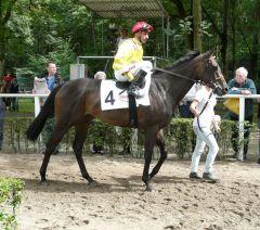 Directa Princess unter Davy Bonilla vor dem Start im Düsseldorfer Diana-Trial, 17.07.2011 (Foto: Gabriele Suhr)