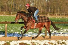Protectionist 2014-01