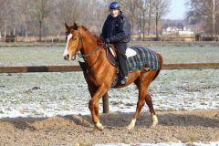 Stallparade 2013 - Raoul