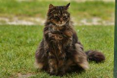 Maxi, des Trainer's Katze