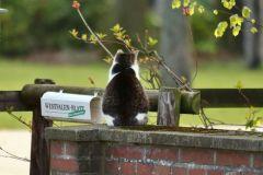 Jakob wartet auf die Zeitung