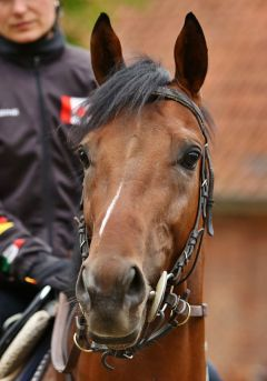 Rogue Runner Juni 2015  Foto: www.rennstall-woehler.de