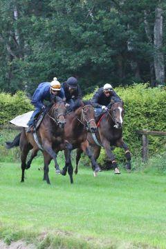Andolini mit Hathras und Kolonel Juni 2012  Foto: www.Rennstall-Woehler.de