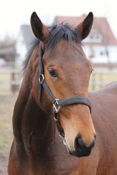 Winafortune auf Gestüt Fährhof März 2011 Foto: www.Rennstall-Woehler.de