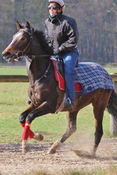 Shamanda März 2012 Foto: www.Rennstall-Woehler.de