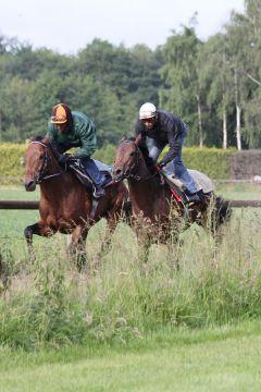 Winafortune mit Horizont (re) Juni 2012  Foto: www.Rennstall-Woehler.de