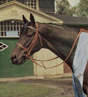 Waidwerk, Derbysieger 1966, im Gestüt Ravensberg.