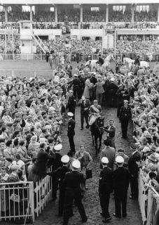 Gestüt Ravensbergs Derbysieger Wilderer 1958.