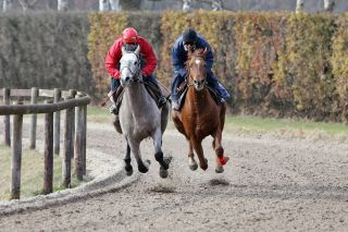 Rock of India (l.) und Hollywood Kiss. Foto (17.03.10): www.galoppfoto.de