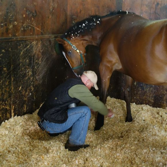 Hallo Trainer ...: Jens Hirschberger bandagiert ein Pferd. Tägliche Routine, die sich dutzendfach wiederholt. www.dequia.de