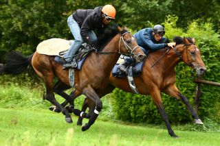 Protectionist und Altano (re.)