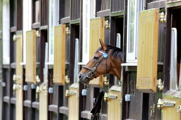 Tiger Hill in Dalham Hall Stud. www.galoppfoto.de - Frank Sorge