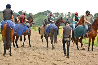 Der in der Mitte - ohne Reiter - ist Villardo